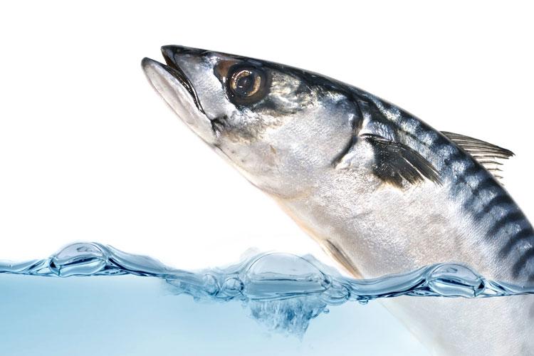 Centro Surgelati Il Pesce Ruffiano